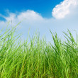 Grass and cloudy sky — Stock Photo #20356341
