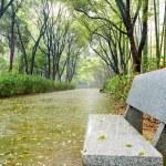 Park in the rain — Stock Photo