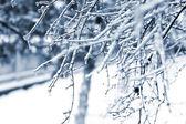 It snows — Stock Photo
