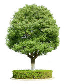 The trees white background — Stock Photo