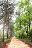 Path in the woods — Stock Photo