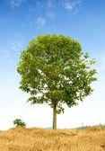 дерево в пустыне — Стоковое фото