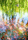 Goldfish pond inside the park — Stock Photo