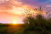 Sunset in the reed — Stock Photo