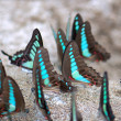 A group of butterflies - Stock Photo