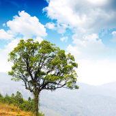 Trees in the wild mountain — Stock Photo