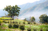 Rural spring scene(China Wuyuan) — Stock Photo