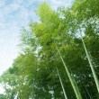 Bamboo — Stock Photo #23285940