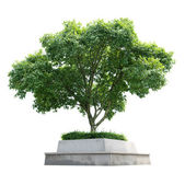 Tree — Stock Photo