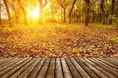 夕暮れ時の森 — ストック写真