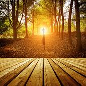在黄昏的森林 — 图库照片