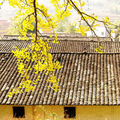 Ginkgo village — Stock Photo