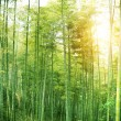 Stock Photo: BAMBOO FOREST by China
