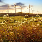 Wind farm — Foto Stock