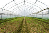 Plastic greenhouses — Stock Photo