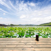 Hangzhou west lake scenery, China — Stock Photo