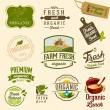 Set of Fresh Organic Labels and Elements  — Stock Vector