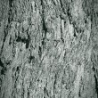 Bark texture — Stock Photo #17519931