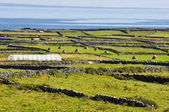 ирландский пейзаж, inishmore, аранские острова в ирландии — Стоковое фото