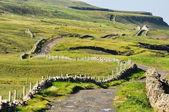 Paisagem irlandesa, co. clare — Foto Stock
