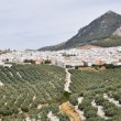 Stock Photo: Panoramic view of Rute, Cordob(Spain)