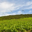 Eolian generators (Basque Country) — Stock Photo