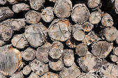 A pile of cut wood — Stock Photo