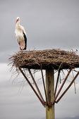 White stork on a nest, Salburua park, Vitoria(Spain) — Foto de Stock