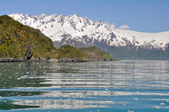 Aialik bay, Kenai Fjords NP, Alaska — Stock Photo