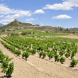 Vineyards near Davalillo castle, La Rioja (Spain) — Stock Photo