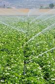 Zraszacze nawadnianie w dziedzinie hodowli (Hiszpania) — Zdjęcie stockowe