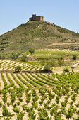 Vineyards near Davalillo castle, La Rioja (Spain) — Stockfoto