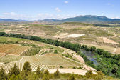 Landscape with vineyards at La Rioja (Spain) — Stock Photo