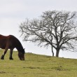 Horse in Gorbea meadow, Basque Country (Spain) — Stock Photo
