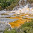 Stock Photo: Orako Korakei geothermal park in Rotorua, New Zealand