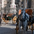Carriages near Cathedral, Seville (Spain) — Stock Photo #27087243
