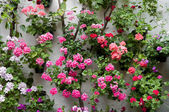 Festival of the Courtyards of Cordoba (Spain) — Stock Photo