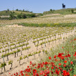 Landscape of La Rioja (Spain) — Stock Photo