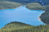 Peyto lake, Rocky Mountains, Canada — Stock Photo