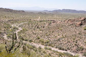 Organ Pipe Cactus National Park, Arizona — Stock Photo