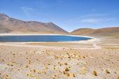 Miniques lagoon in San Pedro de Atacama, Chile — Stock Photo