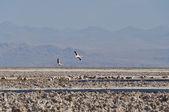 Salt flat of Atacama, Chile — Stock Photo