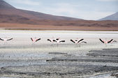 Flamingos in a Salt flat of The Andes — Zdjęcie stockowe