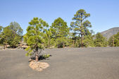 Sunset Crater Volcano National Monument, Arizona — Stock Photo