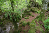 Beech forest , Entzia mountain range, Alava (Spain) — Foto de Stock