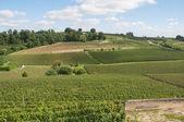 Vineyard at Saint-Emilion, France — Photo