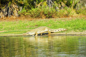 Crocodile, Selous Game Reserve (Tanzania) — Stock Photo