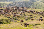 Cattle in a meadow of Pyrenees, Huesca, Spain — 图库照片