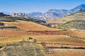 Vineyards, San Vicente de la Sonsierra as background, La Rioja — Stock Photo