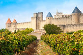 Vineyards and medieval town of Carcassonne (France) — Stock Photo